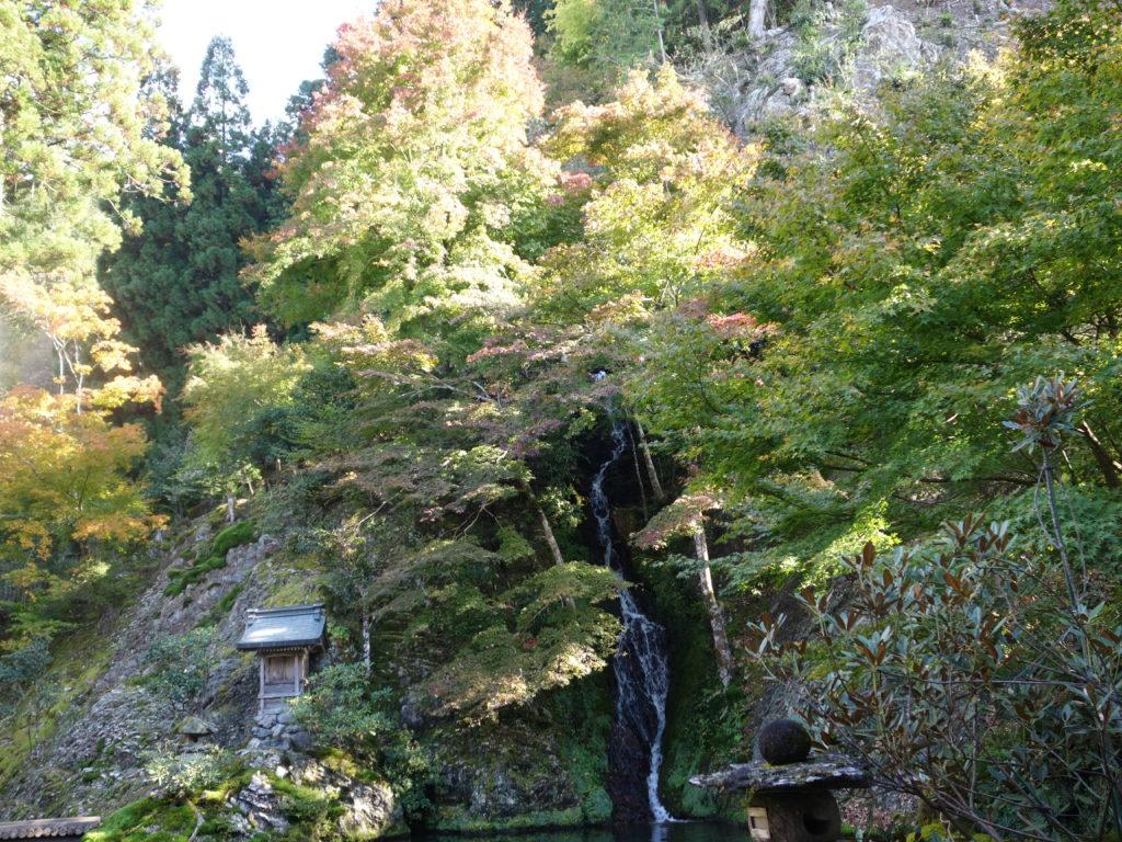 慈恩禅寺のてっ草園