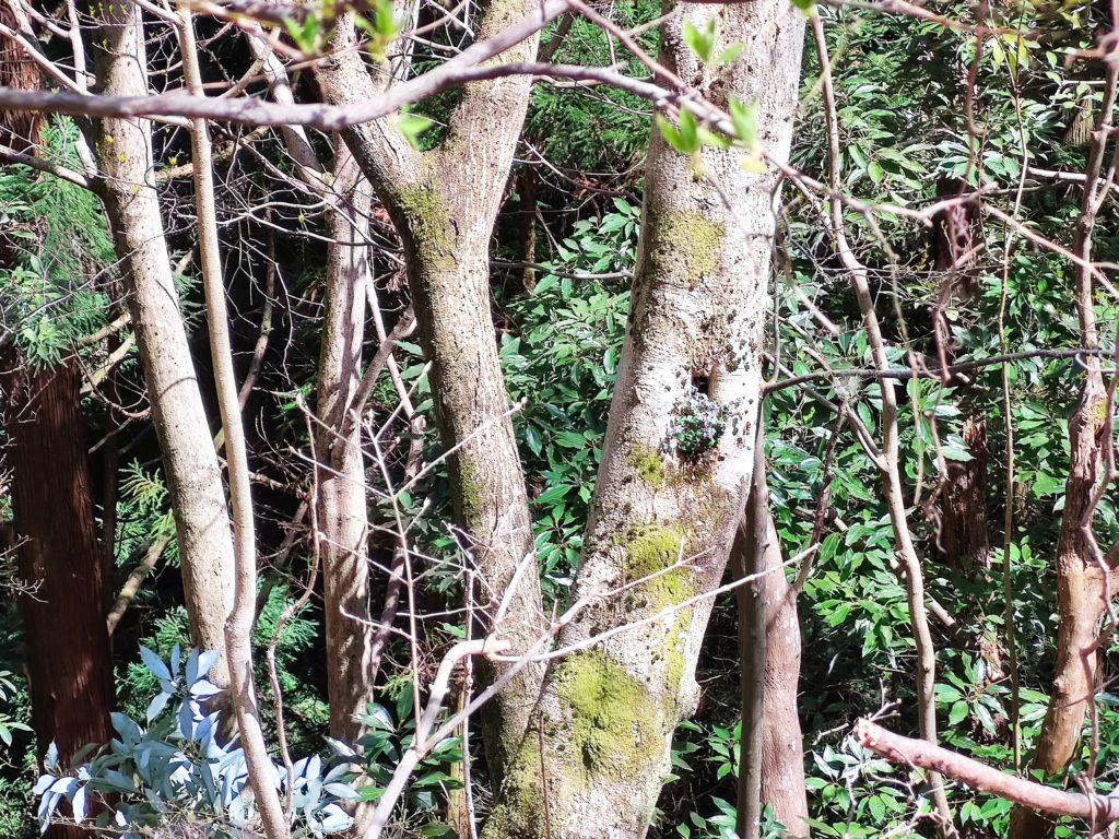 八講師城へ向かう道の森林