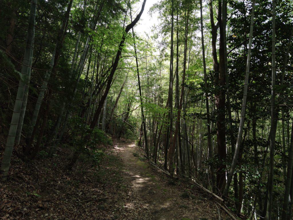 佐和山の竹林