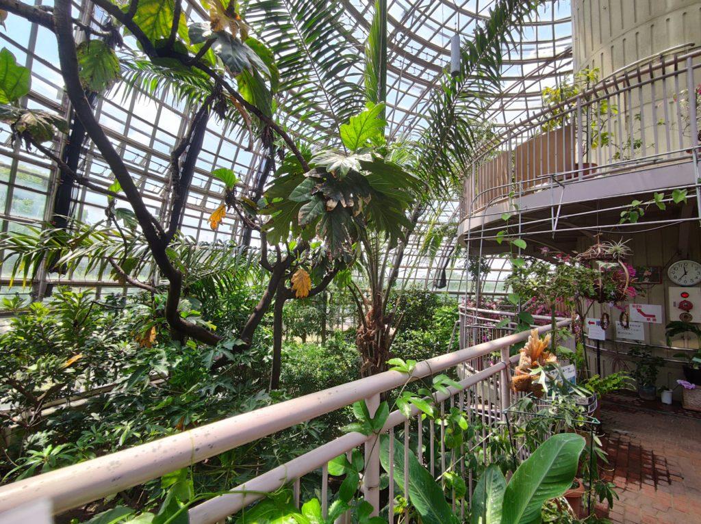 世界の熱帯果樹温室内部