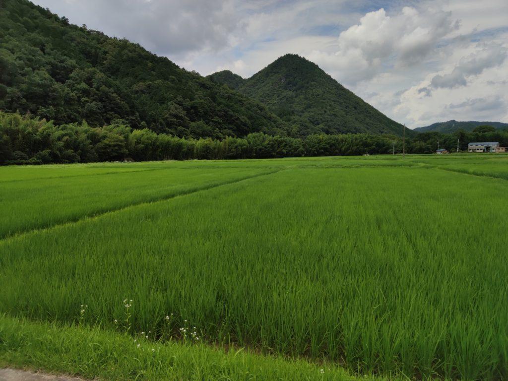 津保川流域の田園