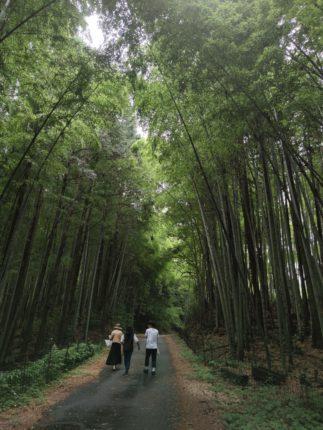 津保川沿いの竹林