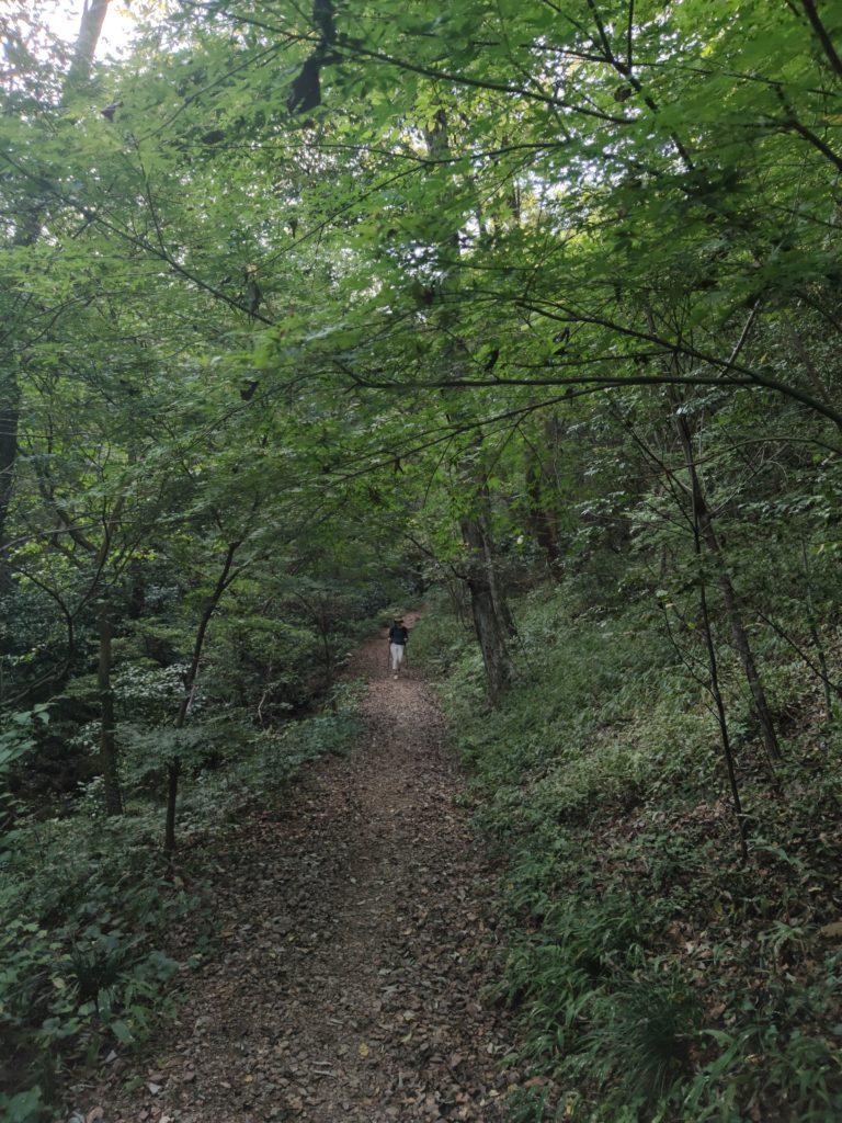 鳩吹山樹林帯の道